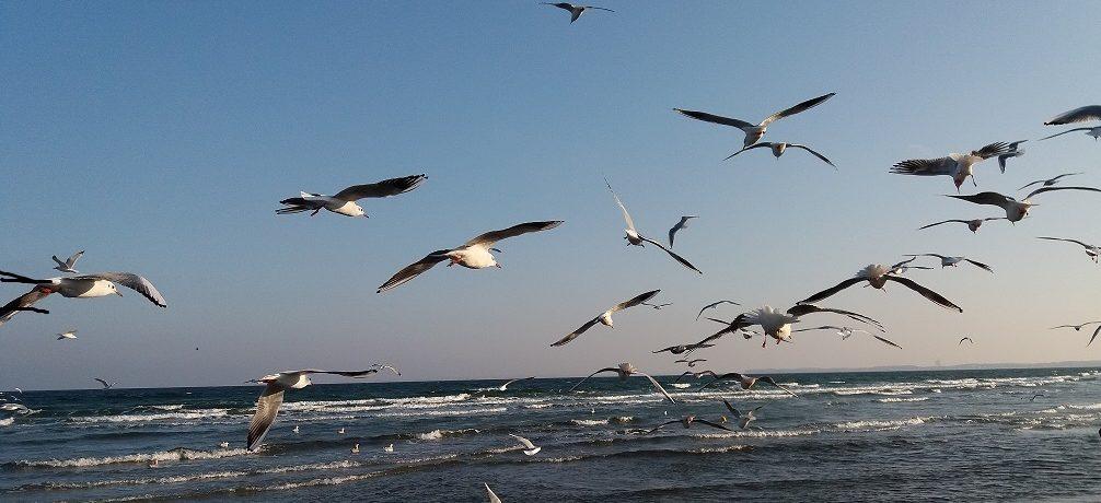 Die Ostsee genießen